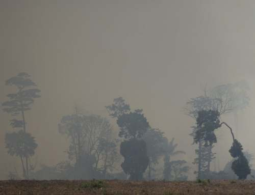 The Amazon Rainforest is Being Burned at Alarming Rates: Deforestation on the Rise in Brazil
