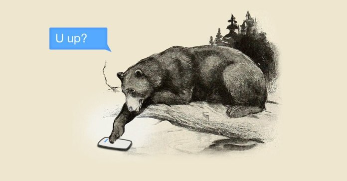 A bear in the 21st century