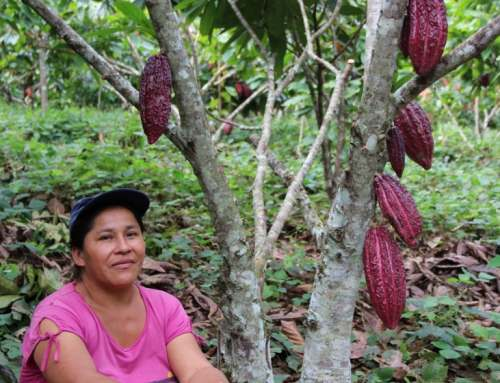 Best Practices: UN and Partners Strive to 'Green' the Cocoa Industry