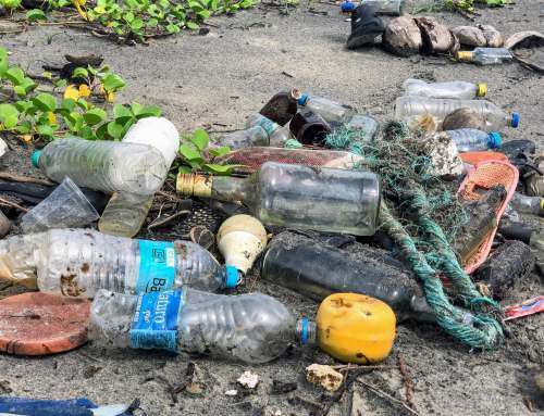 Plastic Free July is Over But the Plastic Fight Continues