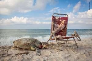 Beach Waste- Matthew Ware