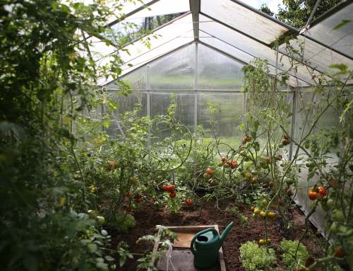 Urban Agriculture Allows Cities to be More Resilient and Self-Sufficient